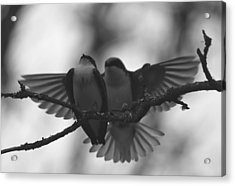 Feathered Encounter Acrylic Print by Angie Vogel