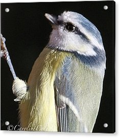 Feathered Friend #feather_perfection Acrylic Print