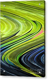 Feathers Acrylic Print by Shirley  Taylor