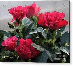 February Roses Acrylic Print