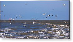 Feed Us - Ferry To Galveston Tx Acrylic Print by Susanne Van Hulst