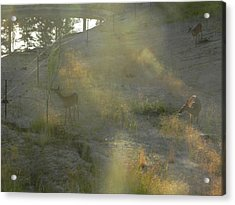 Acrylic Print featuring the photograph Feeding In Light Of Early Morning by Debbi Saccomanno Chan