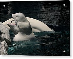 Acrylic Print featuring the photograph Feeding Time by Karen Harrison