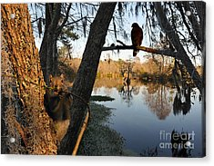 Acrylic Print featuring the photograph Feel Like Being Watched by Dan Friend