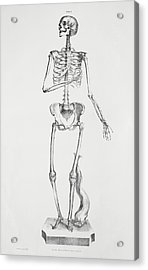 Female Skeleton Acrylic Print by Sheila Terry