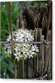 Fence And Flower Acrylic Print by Warren Thompson