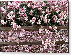 Acrylic Print featuring the photograph Fence Of Flowers by Elizabeth Winter