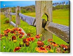 Fence Side Flowers Acrylic Print by Virag Yelegaonkar