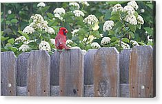 Acrylic Print featuring the photograph Fence Top by Elizabeth Winter