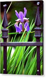 Acrylic Print featuring the photograph Fenced In by Amee Cave