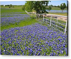 Acrylic Print featuring the photograph Fenceline Flowers by Lynnette Johns