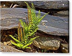 Fern And Rocks Acrylic Print by Susan Leggett
