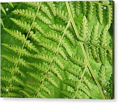 Acrylic Print featuring the photograph Fern Green by Cheryl Perin