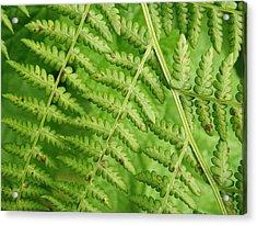 Fern Green Acrylic Print
