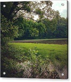 #fern #green #nature #hiking #trail Acrylic Print