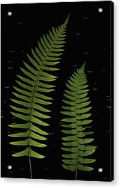 Fern Leaves With Water Droplets Acrylic Print by Deddeda