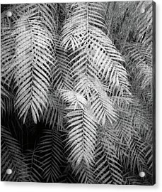 Fern Variations In Infrared Acrylic Print by Andreina Schoeberlein