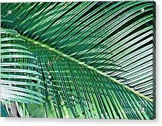 Ferns 56 Acrylic Print