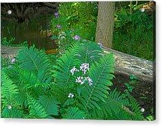 Ferns And Phlox Acrylic Print by Michael Peychich