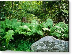 Ferns  At The Edge Of The Woods Acrylic Print by Anne Boyes