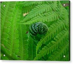 Ferns Fine Art Prints Green Forest Fern Acrylic Print by Baslee Troutman