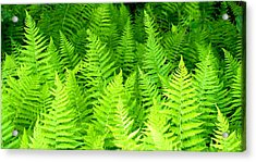 Ferns Galore Filtered Acrylic Print