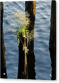 Fertile Ground Acrylic Print