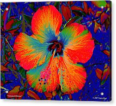 Festonned Hibiscus Acrylic Print