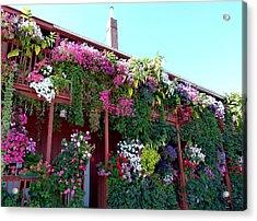 Festooned In Flowers Acrylic Print by Will Borden