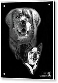 Festus And Rosie Acrylic Print by Peter Piatt