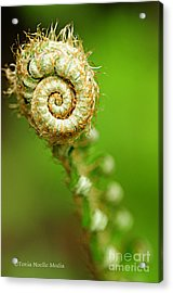 Acrylic Print featuring the photograph Fiddlehead by Tonia Noelle