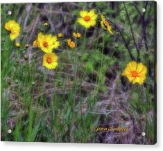 Acrylic Print featuring the photograph Field Flowers by Joan Bertucci