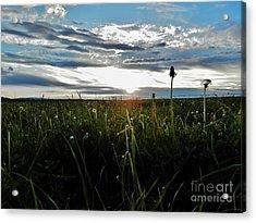 Field Of Alfalfa 5 Acrylic Print by Tayla Hanson