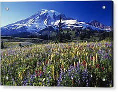 Field Of Blooming Wildflowers In Acrylic Print by Natural Selection Craig Tuttle