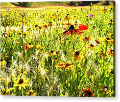 Field Of Bright Colorful Wildflowers Acrylic Print by Anne Mott
