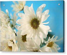 Field Of Daisies Acrylic Print by Mary Broughton