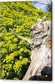 Acrylic Print featuring the photograph Field Of Flowers 1 by Gerald Strine
