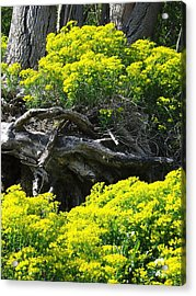 Acrylic Print featuring the photograph Field Of Flowers 2 by Gerald Strine