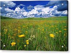 Field Of Flowers, Grasslands National Acrylic Print by Robert Postma