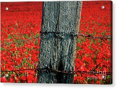 Field Of Poppies With A Wooden Post. Acrylic Print by Bernard Jaubert