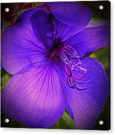 Field Of Purple Acrylic Print by Jeanean Gendron