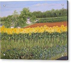Field Of Sunflowers Acrylic Print