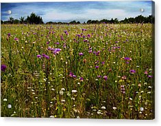 Field Of Thistles Acrylic Print by Tamyra Ayles