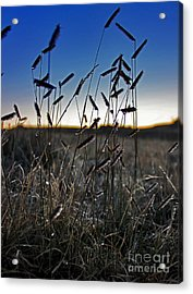 Field Of Wierdness Acrylic Print by Wesley Hahn