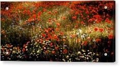 Field Of Wildflowers Acrylic Print by Ellen Heaverlo