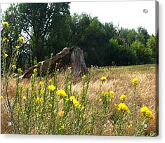 Field Of Yellow Sage In Lakewood Colorado Acrylic Print by Gretchen Wrede
