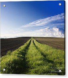 Field Path In Limagne. Auvergne. France. Europe Acrylic Print by Bernard Jaubert