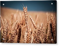 Field Acrylic Print by Pavel Tsvetkov
