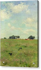 Field With Trees And Sky Acrylic Print