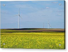 Fields Of Gold Acrylic Print by Straublund Photography